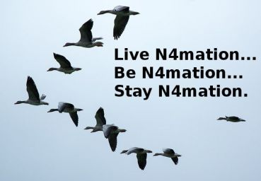 stay-n4mation